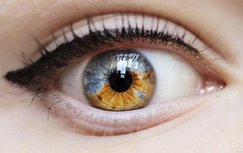 Немного из анатомии: из чего состоит глаз человека?