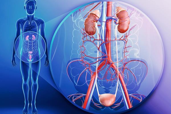 Что такое уротелиальный рак (карцинома) мочевого пузыря?